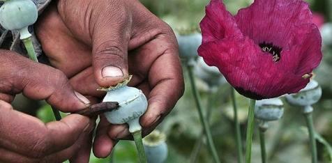 Origen del narcotráfico en mexico