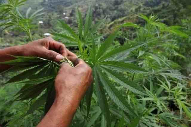 origen del narcotrafico en colombia